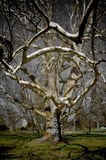 Magic tree. Magic old tree in the park, in the midle of the city Royalty Free Stock Photos