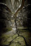 Magic tree. Magic old tree in the midle of the park in Brno town Royalty Free Stock Photo