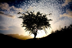 Magic tree stock photos