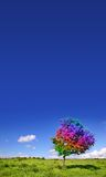 Magic Tree. On grass land royalty free stock photos