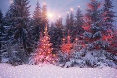 Magic tree on Christmas stock photos
