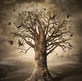 Magic Tree with Crows. Dark magic tree with crows. Digital concept art Stock Photos