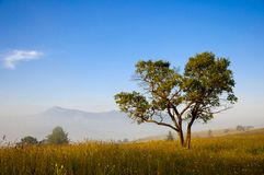 Magic tree in the early morning Royalty Free Stock Photography