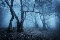 Magic tree in mysterious autumn forest in blue fog Royalty Free Stock Image