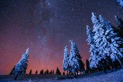 Magic tree in starry winter night. fantastic milky way in the Ne Stock Image