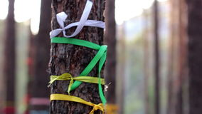 Magic trees decorated with ribbons, traditional wish trees, tourist attraction stock footage