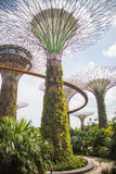 Magic trees of Singapore. Singapore Gardens by the Bay Stock Photos