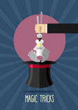 Magic trick. Magician holding rabbit by ears. Rabbit in hat magi Stock Images