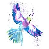 Magic tropical bird Colibri Royalty Free Stock Photography