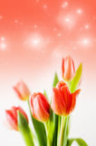 Magic tulips. Bunch of tulips with magic stars over orange background Stock Photography