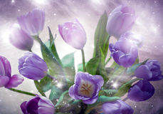 Magic tulips. A bunch of purple tulips in artistic way Stock Image