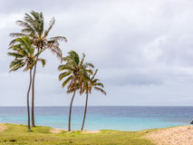 Magic view from Anakena beach. Views of the Ocean from the Anakena Beach in Easter Island stock photo