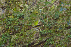 Magic wall rocks covered with moss and ferns Royalty Free Stock Photography