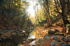 Magic water. Autumn in the deep wood Stock Photos