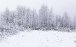 Magic white frozen winter in the forest. Lithuania, Eu Royalty Free Stock Images