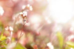Magic wild flowers Royalty Free Stock Photo