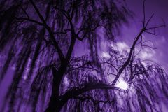 Free Magic Willow Tree Stock Photography - 112091272