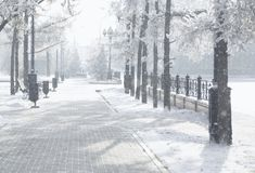 Magic winter city park glowing by sunlight. Snowy town landscape. Beautiful trees in the frost. Backlighting sun effect. Royalty Free Stock Photos