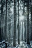 Magic winter forest Royalty Free Stock Photo