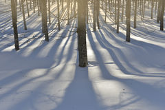 Magic winter forest Stock Photos