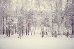 Magic winter forest Stock Photography