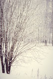 Magic winter forest Royalty Free Stock Images