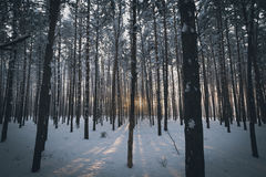Magic winter forest stock images