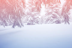 Magic winter landscape - snow covered coniferous forest stock photos