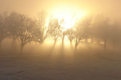Magic winter sun royalty free stock images