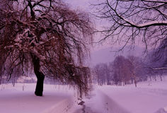 Magic winter pink. It's a beautiful , winter bottom, covered with a pink magic royalty free stock images