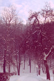 Magic winter pink. It's a beautiful , winter bottom, covered with a pink magic stock images
