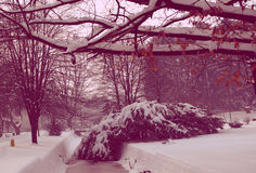 Magic winter pink. It's a beautiful , winter bottom, covered with a pink magic Royalty Free Stock Photography