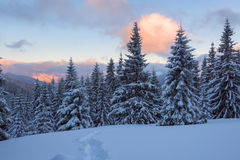 Magic winter sunset in the mountains Stock Photography