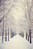 Magic winter way Stock Image