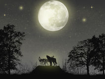 Magic wolves. Nightscene desktop wallpaper royalty free stock photography
