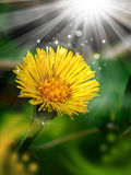 Magic yellow flower. Nature theme royalty free stock photography