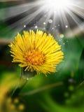 Magic yellow flower Royalty Free Stock Photography