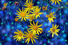Magic yellow flowers Royalty Free Stock Photos