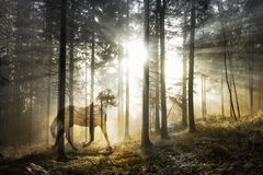Magical abstract horse in fairy forest. Artistic mystical horse in the fantasy sunny fairy forest landscape. Abstract unicorn in the magical woodland. Double Royalty Free Stock Photos