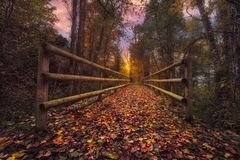 Magical autumn. In the forest Royalty Free Stock Photo