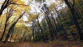 Magical autumn forest, Autumn colors, Autumn trees. Autumn colors. Autumn wind. Fall wind stock footage