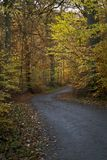 The road trough the autumn woods Royalty Free Stock Photos