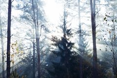 Magical Autumn Forest. Park. Beautiful Scene Misty Old Forest with Sun Rays, Shadows and Fog royalty free stock photos