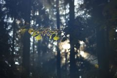 Magical Autumn Forest. Park. Beautiful Scene Misty Old Forest with Sun Rays, Shadows and Fog stock photography