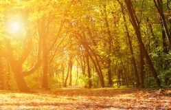 Magical autumn forest on a sunny day Stock Photography