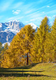 Magical autumn landscape with  yellow larch on a background of m. Ountains in the Dolomites in a sunny day. Dolomites in South Tyrol, Alps, Italy. Meditation Stock Photo