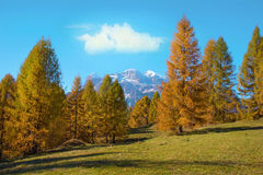 Magical autumn landscape with  yellow larch on a background of m. Ountains in the Dolomites in a sunny day. Dolomites in South Tyrol, Alps, Italy. Meditation Royalty Free Stock Photography