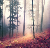 Magical autumn season mysterious forest Stock Image