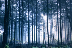Magical blue colored light in the woods Royalty Free Stock Photo