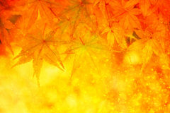 Magical blurred golden color autumn maple leaves in the rain Stock Photo